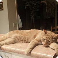 Adopt A Pet :: Kevin - Mesa, AZ
