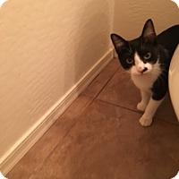 Adopt A Pet :: Winnie - Scottsdale, AZ
