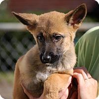 Adopt A Pet :: Madison AD 02-06-16 - Preston, CT