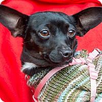 Adopt A Pet :: Onyx - San Marcos, CA