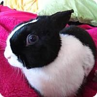 Adopt A Pet :: Lola - Conshohocken, PA
