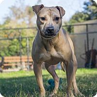 Adopt A Pet :: Homer - Jacksonville, FL