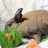 Adopt A Pet :: Hazel - Portland, ME