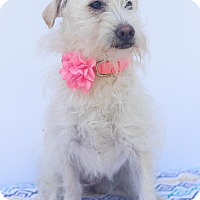 Adopt A Pet :: Jem - Loomis, CA