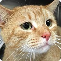 Adopt A Pet :: Marty - New York, NY