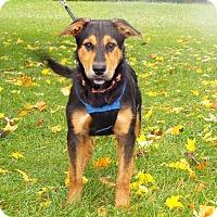 Adopt A Pet :: Quinn - Shelby, MI