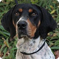 Adopt A Pet :: JINX - Red Bluff, CA