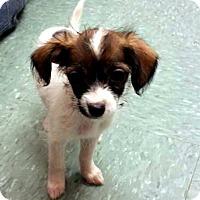 Adopt A Pet :: Ariel - Tijeras, NM