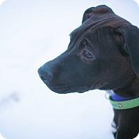 Adopt A Pet :: Anneka - Stillwater, OK