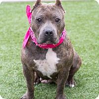 Adopt A Pet :: Marmee - Chandler, AZ