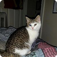 Adopt A Pet :: Littles - Richmond, VA
