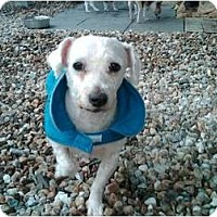 Adopt A Pet :: SHAGGY - Dennis, MA