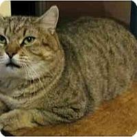 Adopt A Pet :: Handsome - Plainville, MA