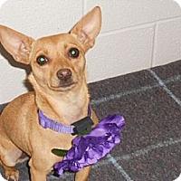 Adopt A Pet :: Cha Cha - Lockhart, TX