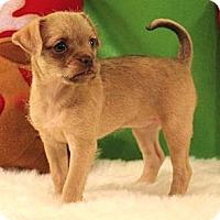 Adopt A Pet :: *Jill - PENDING - Westport, CT
