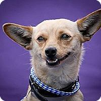 Adopt A Pet :: Bingo - Winchester, CA