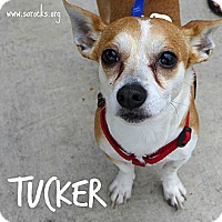 Adopt A Pet :: Tucker - San Antonio, TX
