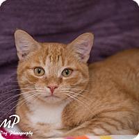 Adopt A Pet :: Redford - Fountain Hills, AZ