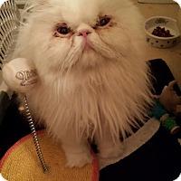 Adopt A Pet :: Izzy - Columbus, OH