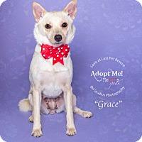 Adopt A Pet :: Grace - Katy, TX