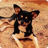 Adopt A Pet :: Monte' - Nanuet, NY