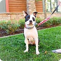 Adopt A Pet :: Patch - Sacramento, CA