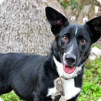 Adopt A Pet :: Norbert - 28 pounds - Los Angeles, CA