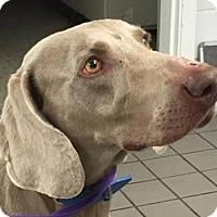 Adopt A Pet :: Reagan - Birmingham, AL