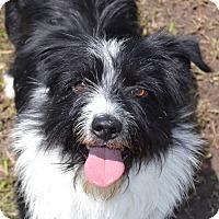 Adopt A Pet :: Ranger - Larned, KS