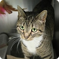 Adopt A Pet :: Lady Jane (foster care) - Philadelphia, PA