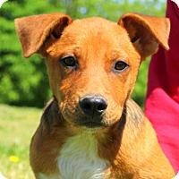 Adopt A Pet :: Saucy~meet me - Glastonbury, CT
