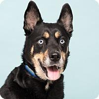 Adopt A Pet :: Zoe - Westfield, NY