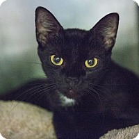 Adopt A Pet :: Anastasia - Austin, TX