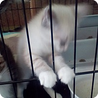 Adopt A Pet :: Kelli - West Dundee, IL
