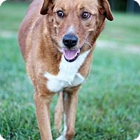 Adopt A Pet :: Julie - Waldorf, MD