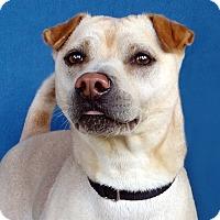 Adopt A Pet :: Blake - Renfrew, PA
