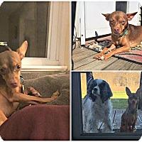 Adopt A Pet :: Buddy - Kimberton, PA