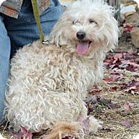 Adopt A Pet :: Molly - Yreka, CA