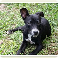 Adopt A Pet :: Lacy - Weeki Wachee, FL
