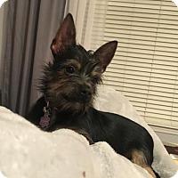 Adopt A Pet :: Samauri - Matthews, NC