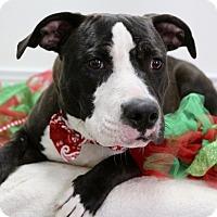 Adopt A Pet :: Fathead - Picayune, MS