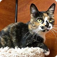 Adopt A Pet :: Mitzi - san diego, CA