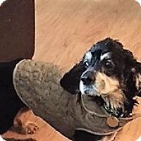 Adopt A Pet :: Gino - Sacramento, CA