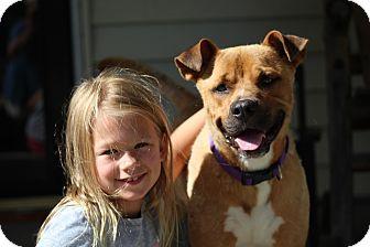 Boxer Mix Dog for adoption in Glastonbury, Connecticut - DeShazo