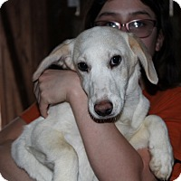 Adopt A Pet :: Jenna - Harmony, Glocester, RI
