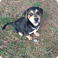 Adopt A Pet :: Maggie - Bernardston, MA