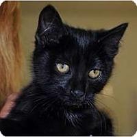 Adopt A Pet :: Cass - Monroe, GA