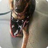 Adopt A Pet :: Trigger - Vista, CA
