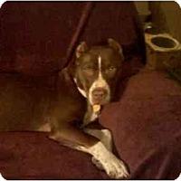 Adopt A Pet :: TIARA - Fowler, CA