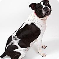 Adopt A Pet :: Elsie - Metairie, LA